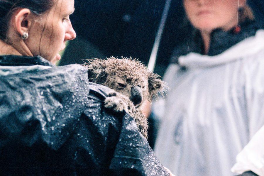 Η σχέση μας με τα ζώα: Πεποιθήσεις, ηθική, λογική & συναίσθημα