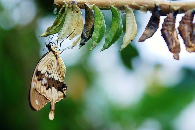 μεταμόρφωση από κάμπια πεταλούδα