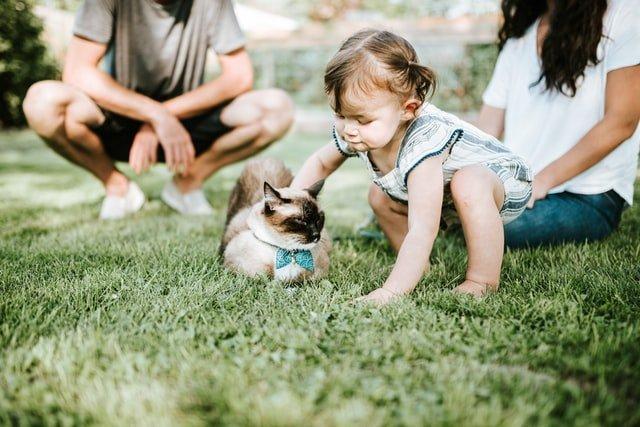 συναισθηματική νοημοσύνη κορίτσι χαϊδεύει γάτα